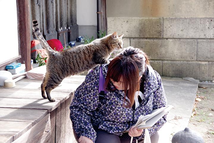 猫_研究2
